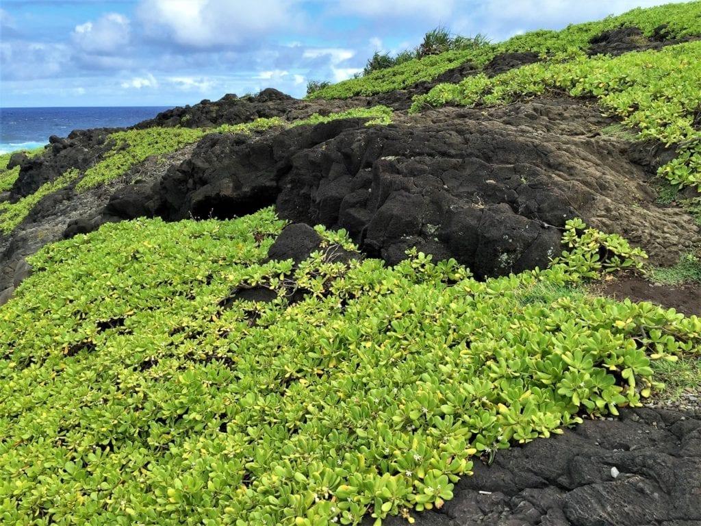 road to Hana Hawaii